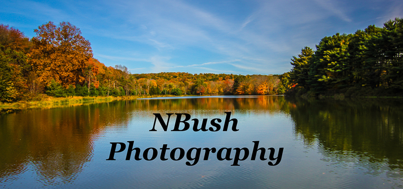 NBush Photography