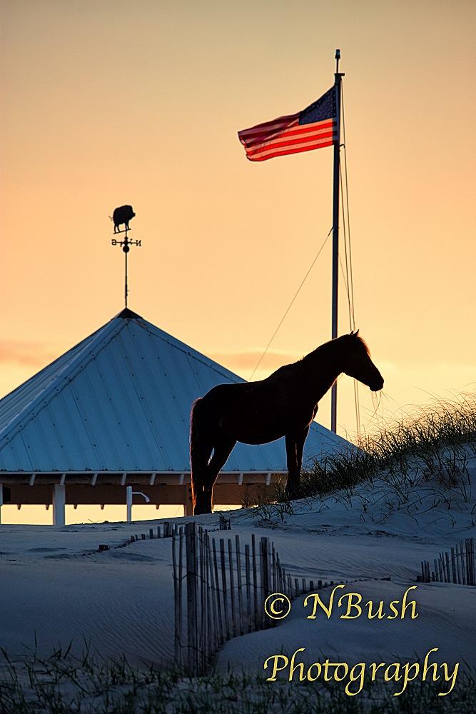 Memorial Day Mustang Silhouette
