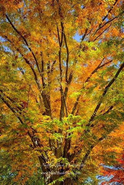 Intertwined Foliage